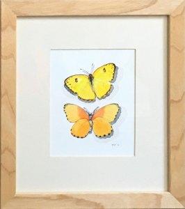 Butterflies Yellow Pierids Frame