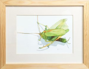 Framed Print: Grasshopper, Close