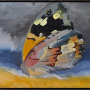 Oil Painting Seascape and Butterfly Marbled Xenica Phillip Island