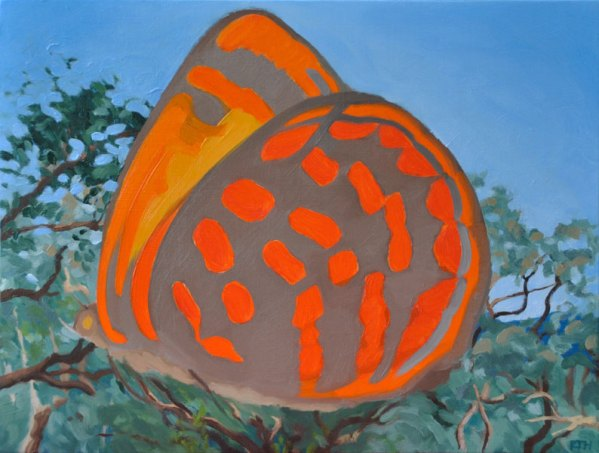 Oil Painting of Butterfly Moonlight Jewel Eltham