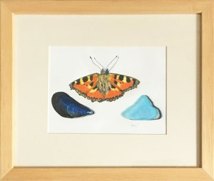 Framed Drawing: Tortoiseshell Butterfly and Beach Bits
