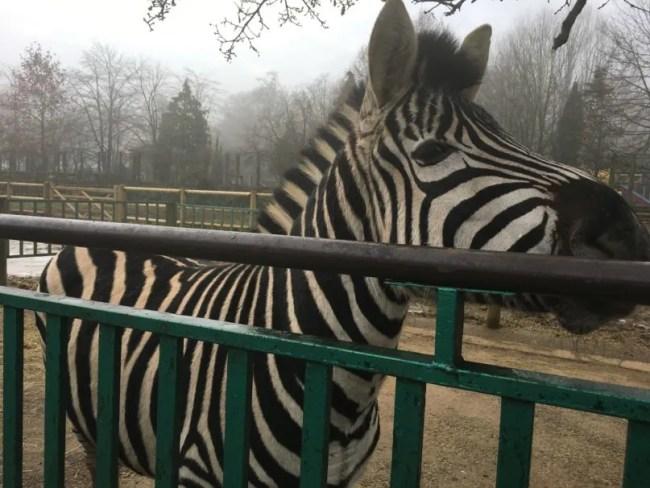 Paradise Wildlife Park Review 5