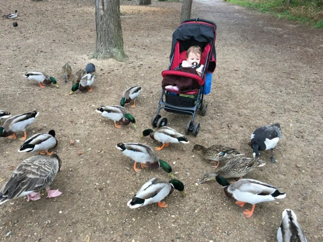 Daisy is 14 months old - Daisy enjoying the ducks on holiday at Centerparcs