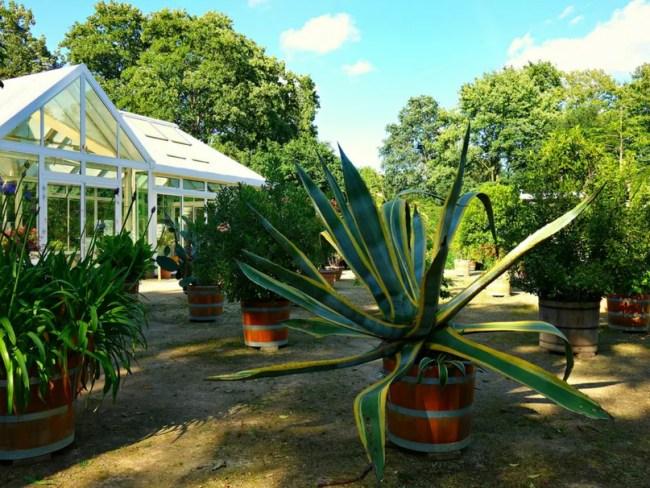 My dream conservatory
