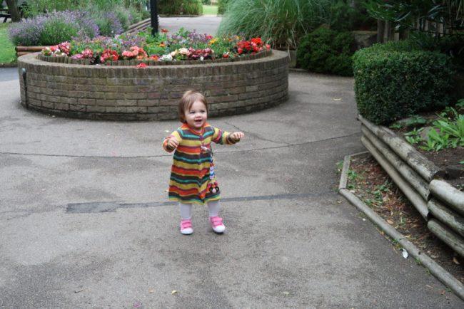 Tea with the tigers - Daisy having a walk at Paradise Wildlife Park