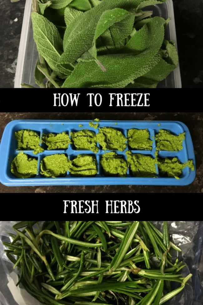How I freeze fresh herbs. I freeze sage, coriander, rosemary, lemon thyme and more. Cutting food waste is a big part of our family life and is a great for money saving too
