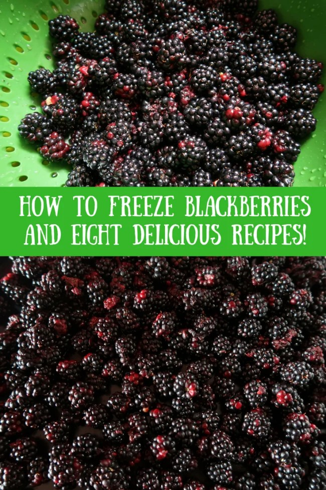 How to freeze blackberries and use up excess produce from your allotment. Delicious blackberry recipes, use up leftover berries