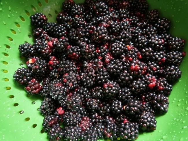 How to freeze blackberries rinse the blackberries