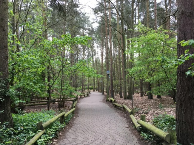 What to pack for centerparcs - the forest