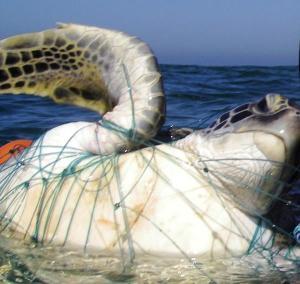 Green caught in net-Alejandro Fallabrino