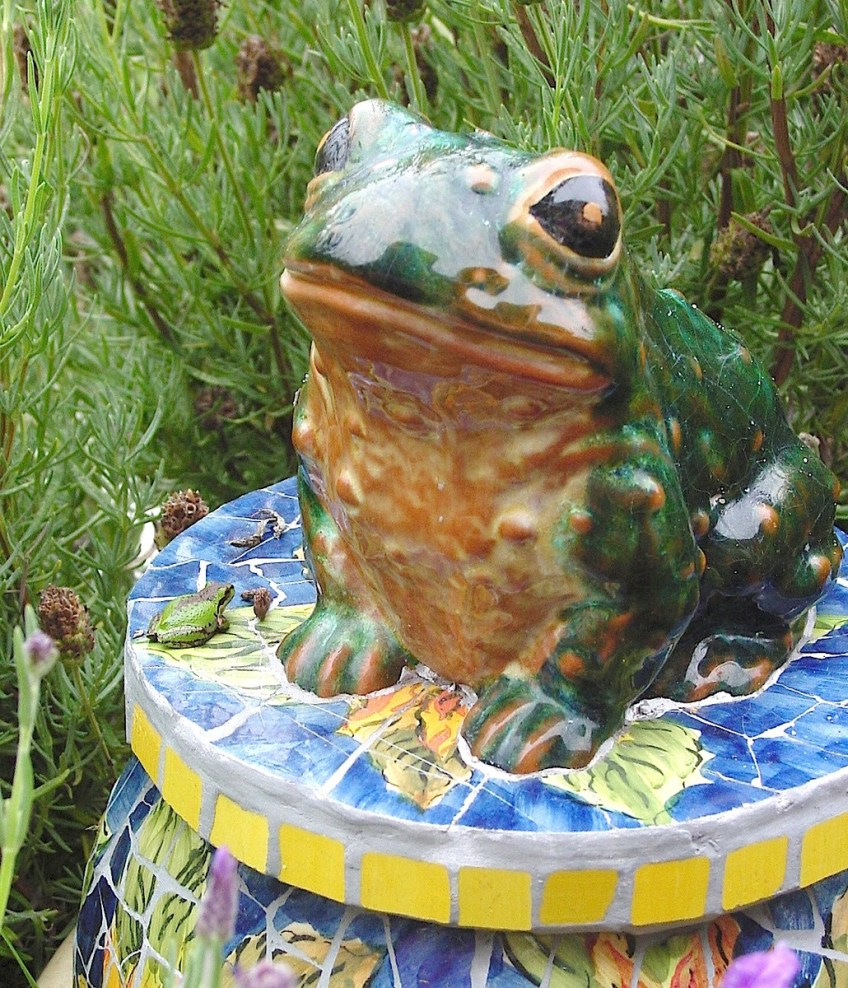 Find the frog on the frog house? Photo: Katy Pye All rights reserved