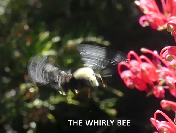Whirly bee image by Katy Pye