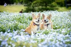 Copyright (C) Katsuyuki Sato K works