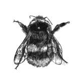 busy-bee-high