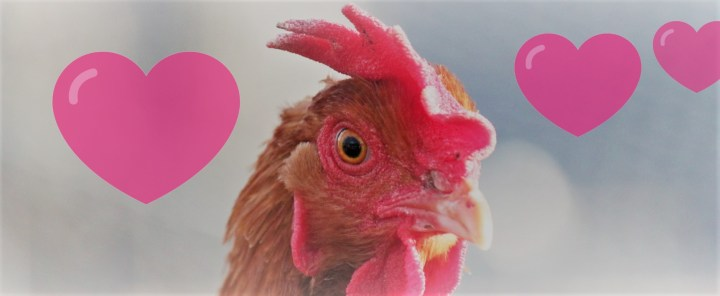 The Music That Inspired my Fowl Romance