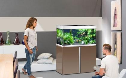 Mit einem Aquarium holt man sich sein ganz eigenes kleines Unterwasserbiotop nach Hause.