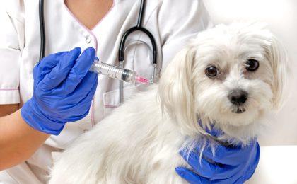 Regelmäßige Impfungen können die treuen Vierbeiner vor schlimmen Krankheiten schützen.