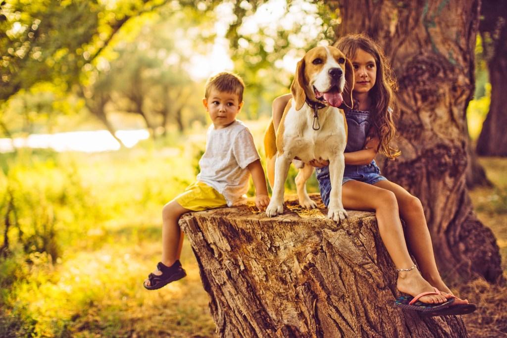 Besonders wenn der Familienhund im engen Körperkontakt mit Kindern steht, wollen viele Tierhalter zum Zeckenschutz keine chemischen Mittel einsetzen.