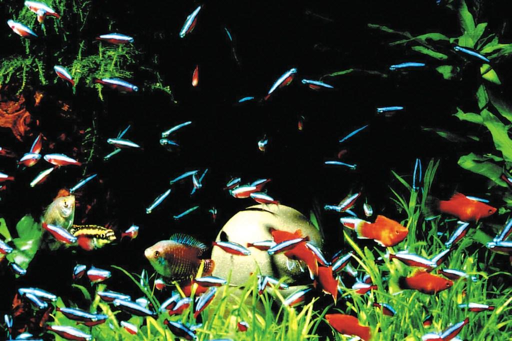 Mit einem gepflegten Aquarium kommt ein Stück Natur ins heimische Wohnzimmer, das zu einer angenehmen und entspannten Atmosphäre beiträgt.
