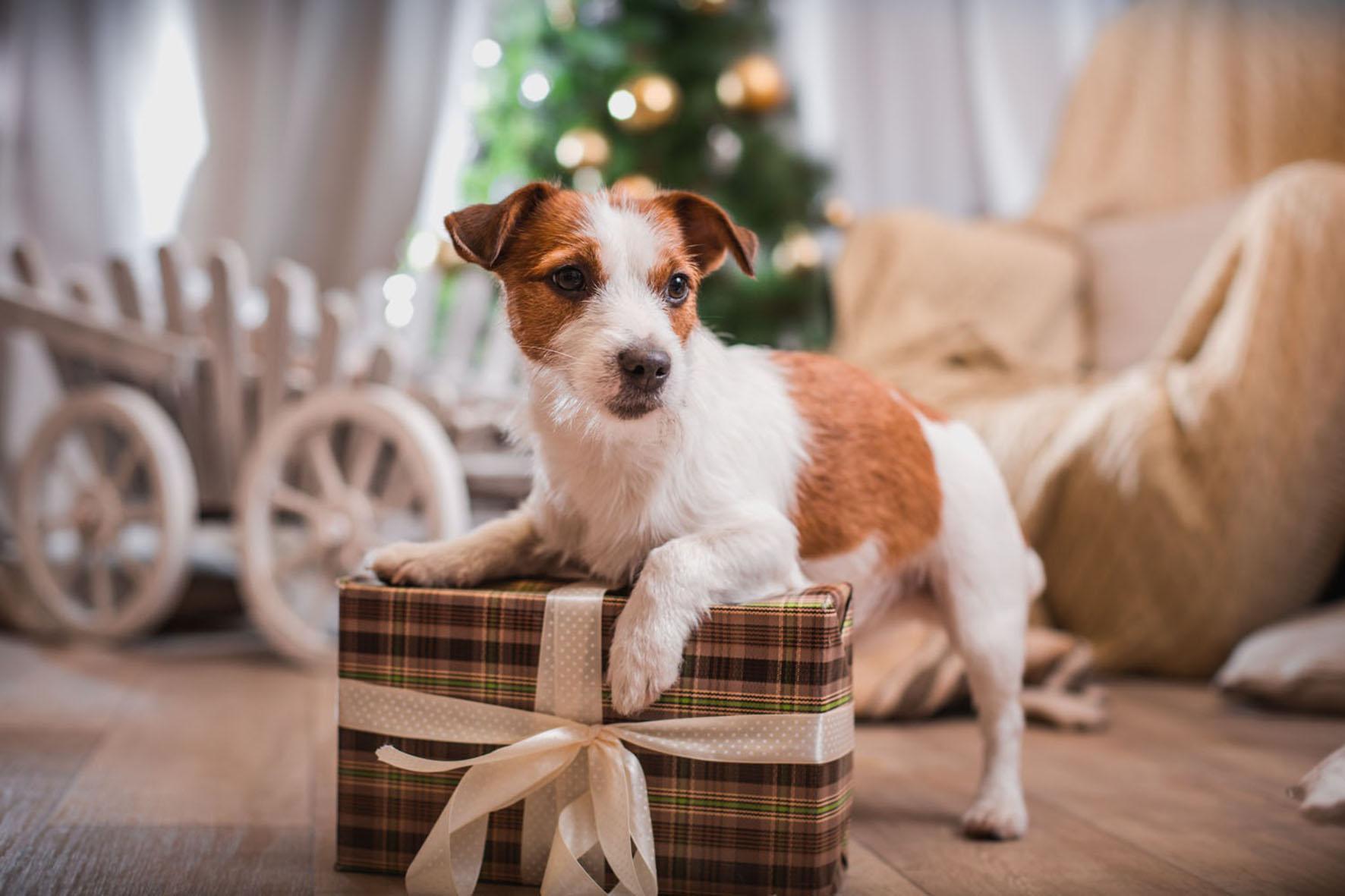 Tierisch schöne Weihnachten