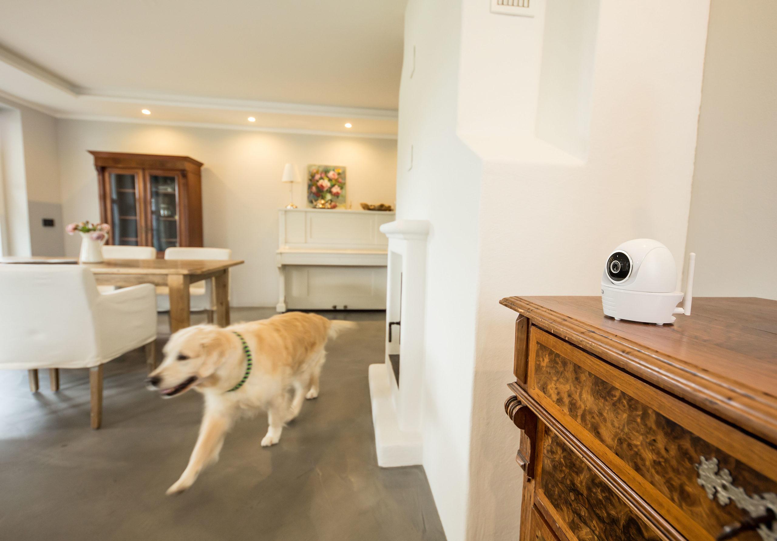 Hund und Katze alleine zu Hause mit IP Kamera immer im Blick