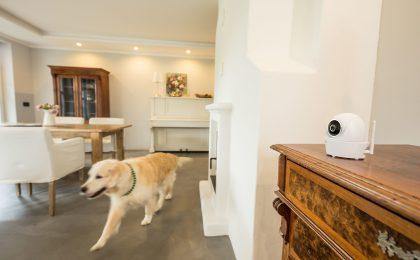Hund und Katze alleine zu Hause
