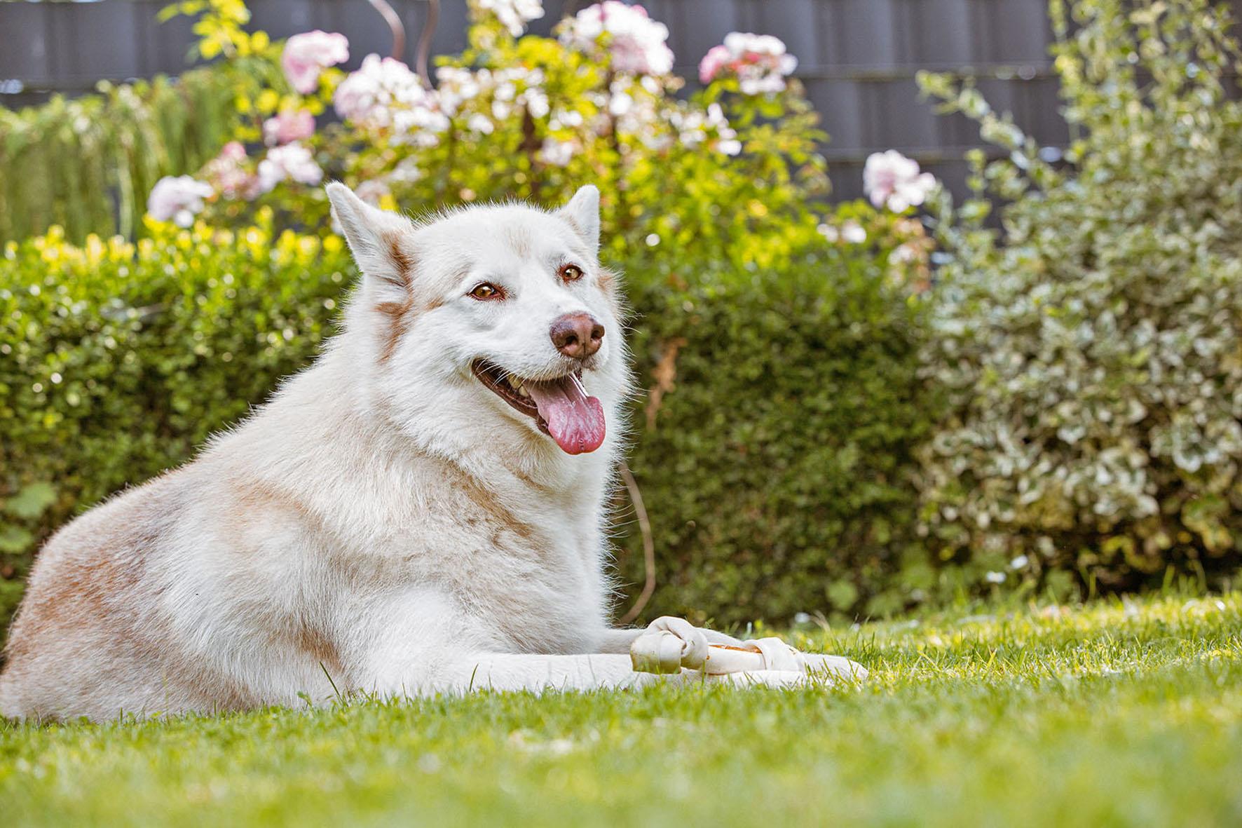 Hundebesitzer und Garten – Ab ins Beet! Oder nicht?