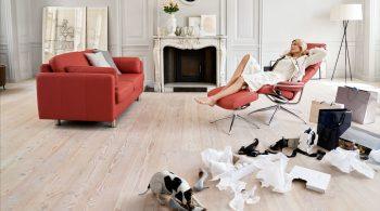 Modernes Wohnzimmer mit Hund - Sofawahl für Tierfreunde