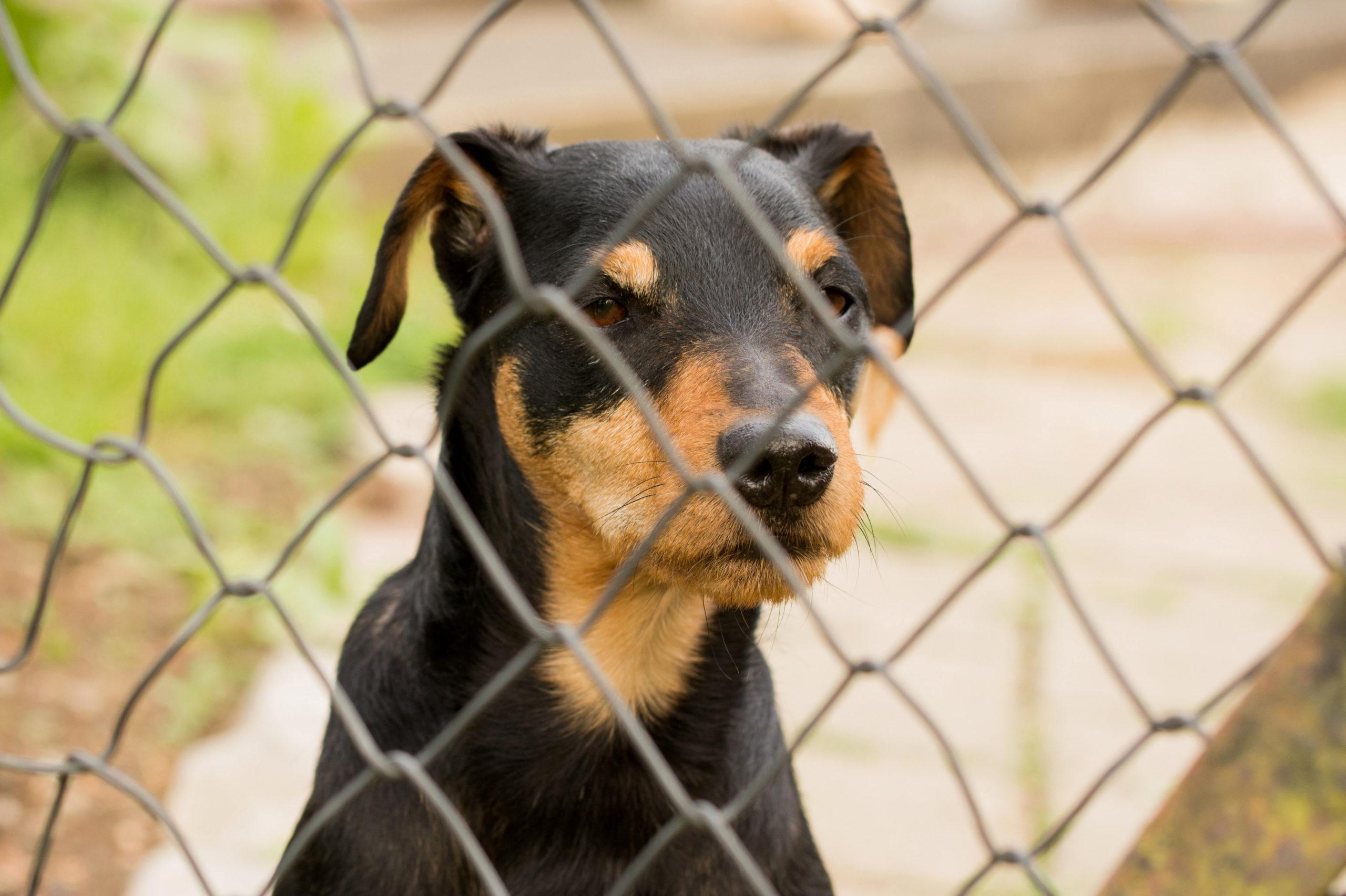 Tierheim Hunde – Der beste Freund aus dem Tierheim