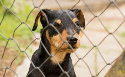 Hund im Tierheim - Tierheim-Hunde