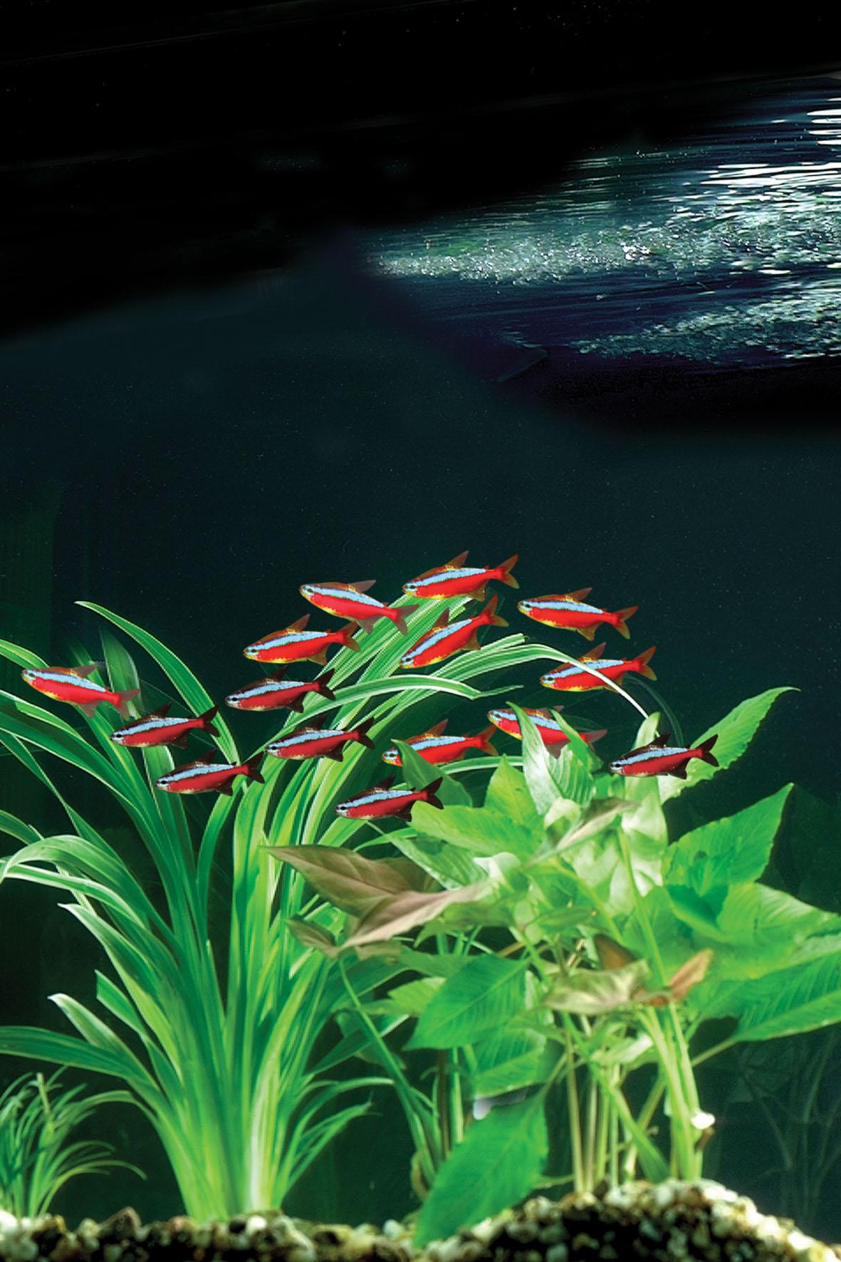Aquarium mit Aquarium-Filter