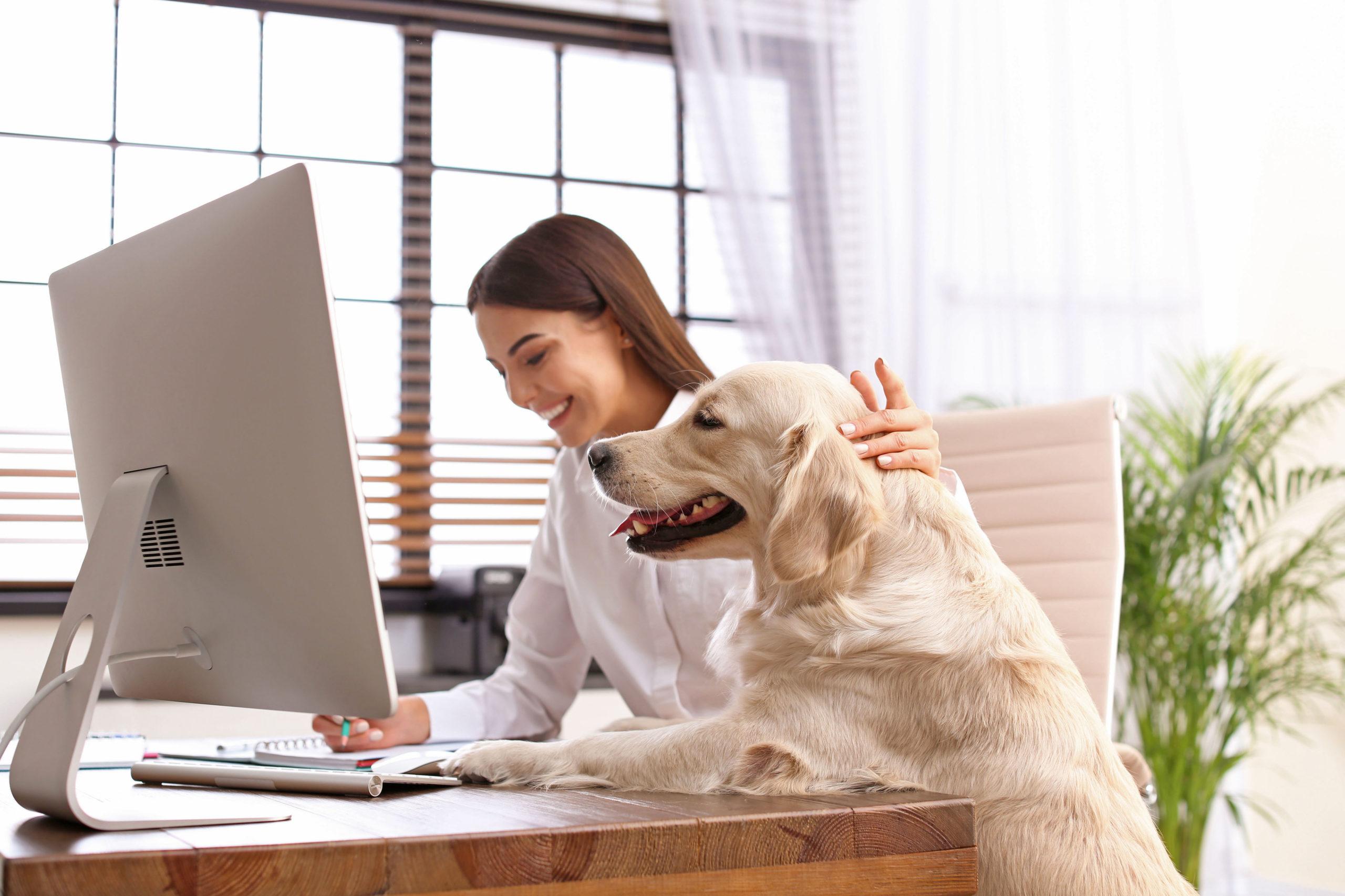 Hunde- und Katzenbesitzer im Lockdown