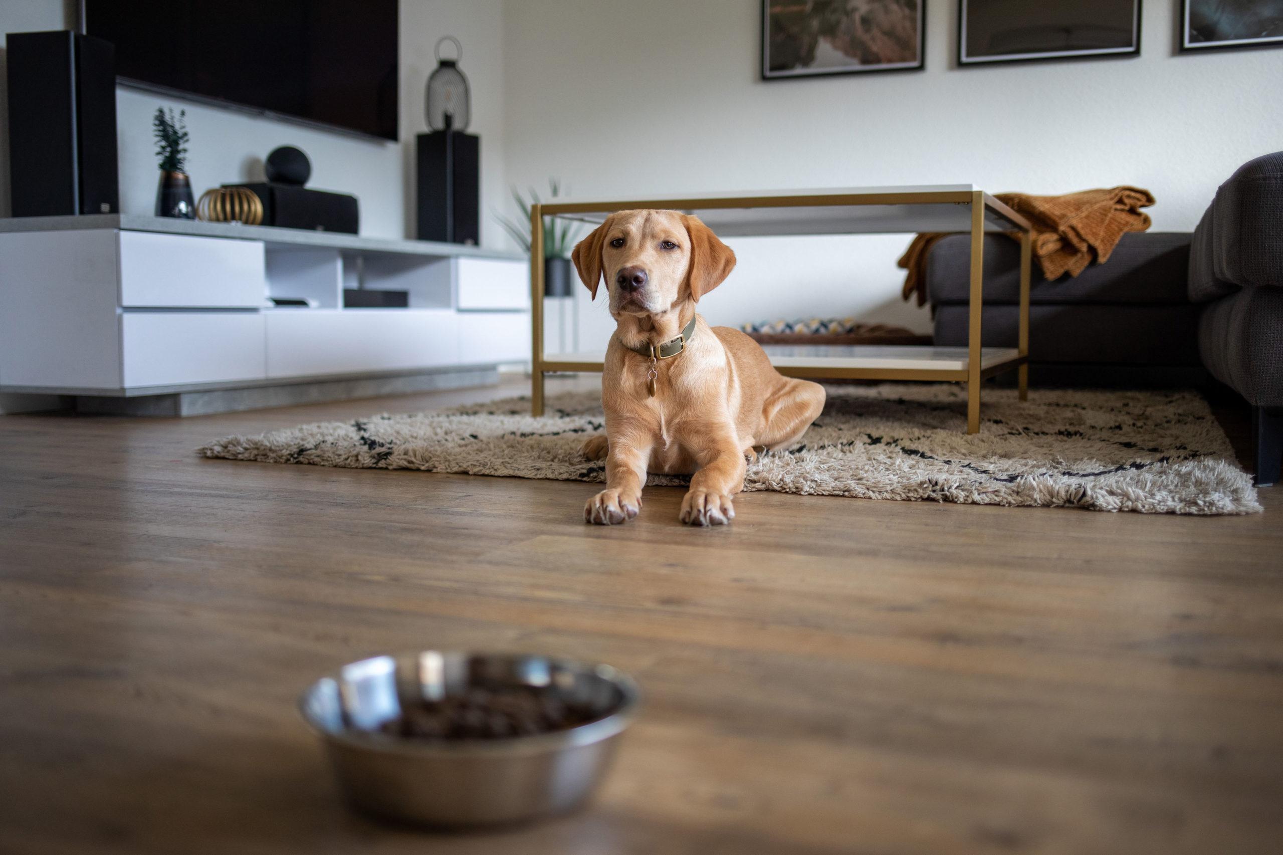 Ernährung von Hundewelpen