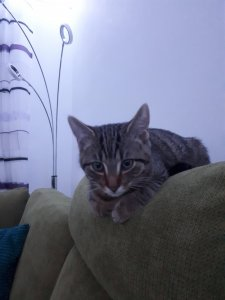 Hellbrauner Stuhl Katze : hellbrauner, stuhl, katze, Heller,, Beiger, Problem?