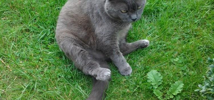 Übergewicht und die Katze auf Diät