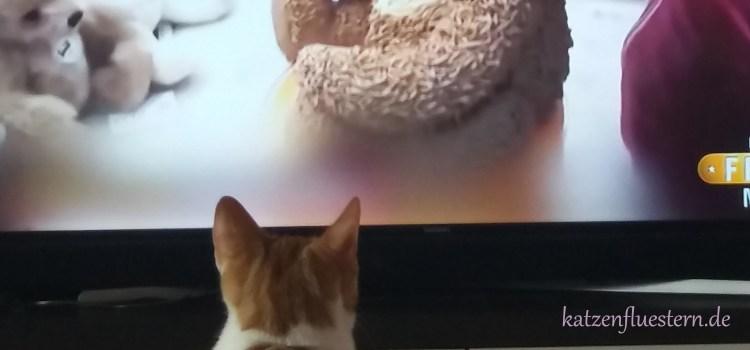Katzenbabys gucken Fernsehen