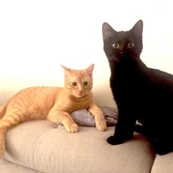 Wie viel kostet eine Katze? Wie viel kostet eine Grundausstattung? Beispielrechnung von Katzenfritz