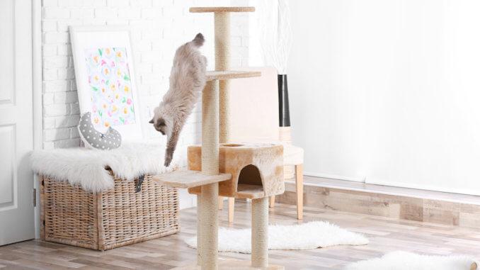 Stabiler Kratzbaum Für Große Katzen Test Vergleich 2019