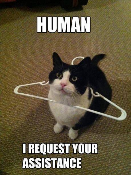 human-assistance