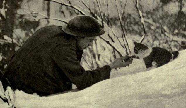 cats of world war 1 - 15