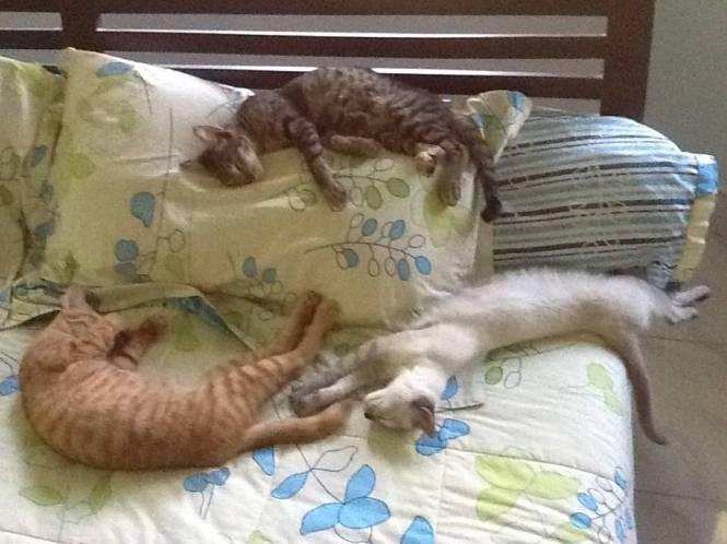 sleeping babies