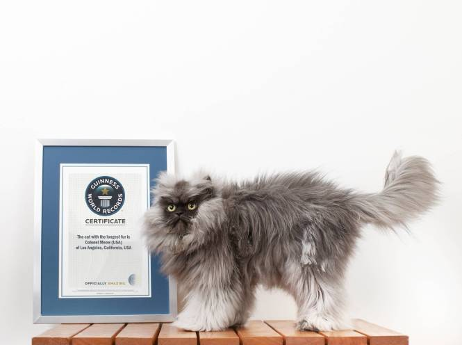 137914 Colonel Meow - Cat With The Longest Fur_0196