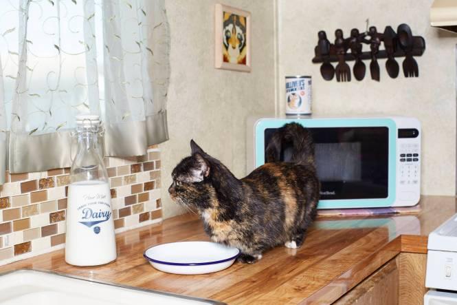 Lilieput - Shortest Cat_011414_6795
