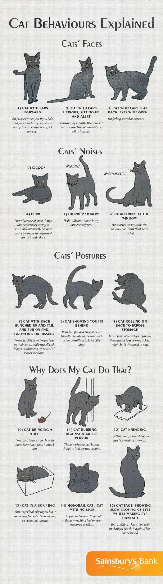 cat-behaviour-explained
