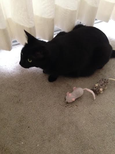 Friendly and mice