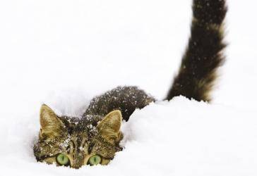 Hiding in the Snow _0
