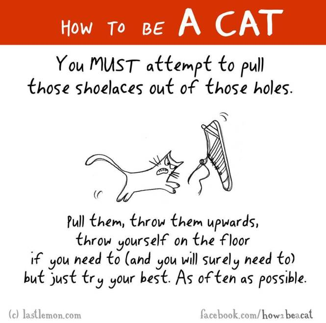 How to be a cat 10