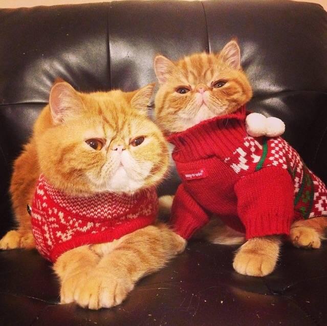Awkward christmas photos 121414
