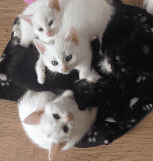 Samantha cat