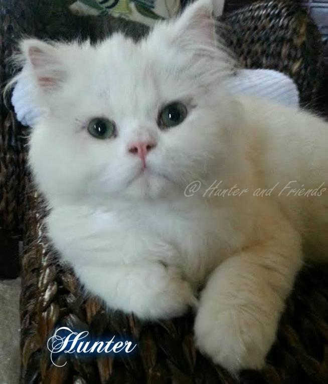 hunter and friends cat